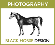 Black Horse Design Photography (North Yorkshire Horse)